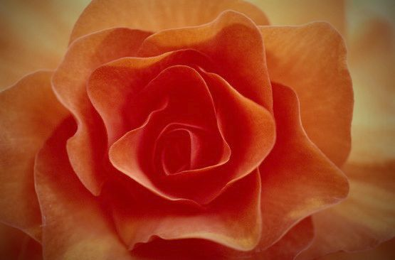SusiLog: Naranja,flor
